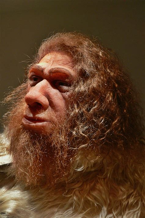 Cro Magnon Man Life-Like Bust   Thank you for taking time