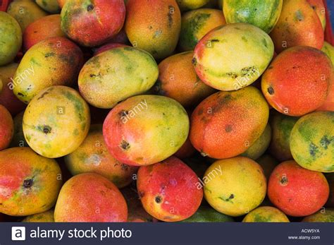 Mango Fruit Displayed At The Floating Market In Curacao