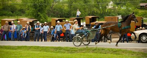 Amish Carriage Horse Auction (or a gathering of our Amish